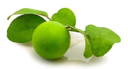 lemon on white background