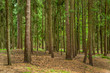 canvas print picture - Bäume im Wald