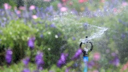 Close up water sprinkler spray ring, flower garden background.