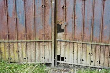 Vieus portaille rouillé