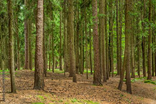 canvas print picture Bäume im Wald