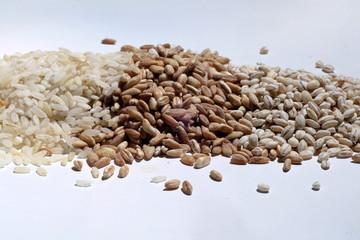riso alimento agricoltura biologica