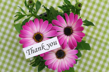 Thank you card with pink gerbera daisies