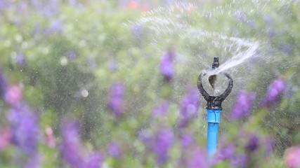 Close up water sprinkler spray watering