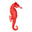 Leinwandbild Motiv Seahorse