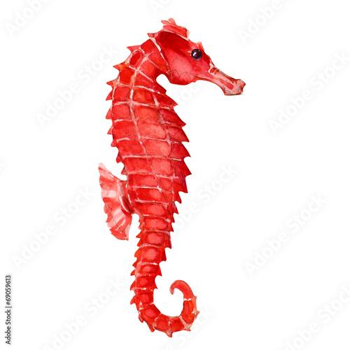 Seahorse - 69059613