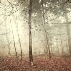Grunge mystic forest