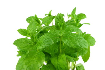 Studio shot of mint leaves isolated on white
