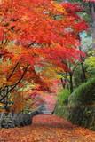 Fototapety 吉野 高城山遊歩道の紅葉