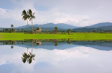 rural scenery in Kota Marudu,Sabah,Malaysia,Borneo