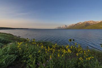 Jackson Lake Wyoming