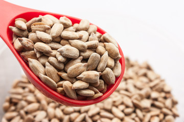 Close up sunflower seed in red spoon