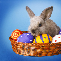 Easter bunny on blue background