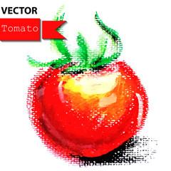 Tomato vegetable on white background.