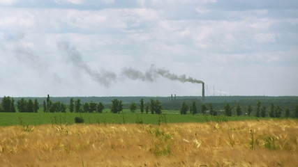 Industrial pipes with  smoke and field of wheat. Landscape,