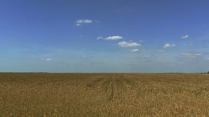 Beautiful clouds over  wheat  field. Landscape, time lapse