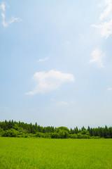 青空と初夏の高原