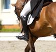 Obrazy na płótnie, fototapety, zdjęcia, fotoobrazy drukowane : dressage horse