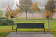 canvas print picture - Autumn sakura trees and bench in the park