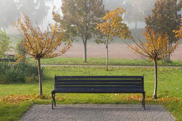 Autumn sakura trees and bench in the park