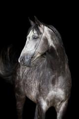 Gray horse head on black background
