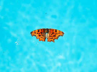 dead insects and butterfly on surface of water