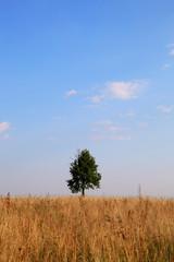 Lonely tree on a meadow. Landscape.