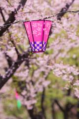 桜とランタン