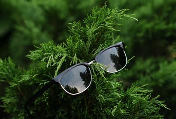 Reflecting retro sunglasses on green fur-tree.
