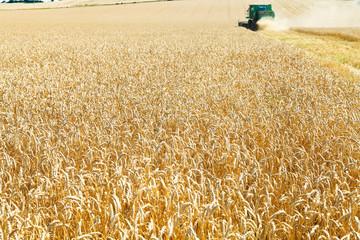 harvesting in field of ripe wheat