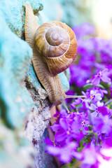 Snail in flowers