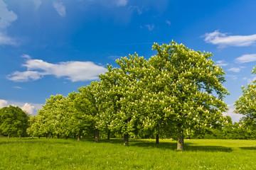 Sunny Summer landscape meadow
