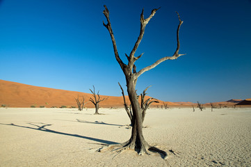 Dead vlei, desert