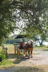 horse with carriage in village