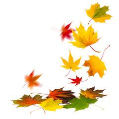 Bunte Herbstblätter fallen auf den Boden