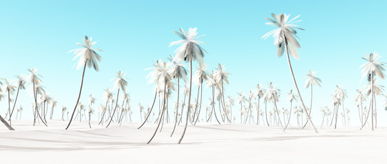 Winter snow white palm beach landscape with blue sky.