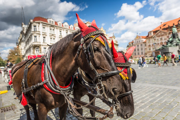 Horse Carriage at the Old Square in Prague.