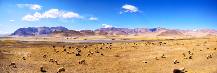 Tibetan landscape panorama with mountains and sheep