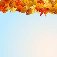 осенний фон с желтыми листьями