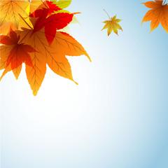 осенний фон с прозрачными цветными листьями