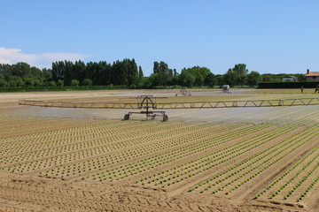 large intensive irrigation in vegetable field