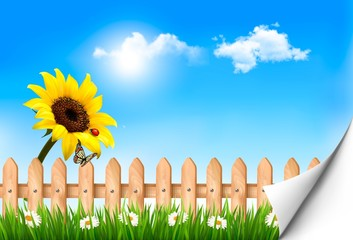 Summer nature background with sunflower and wooden fence .