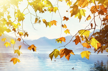 Autumn leaves against mountain lake. Switzerland
