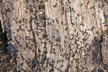 Ants on a tree stump