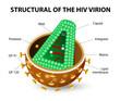 HIV Virion
