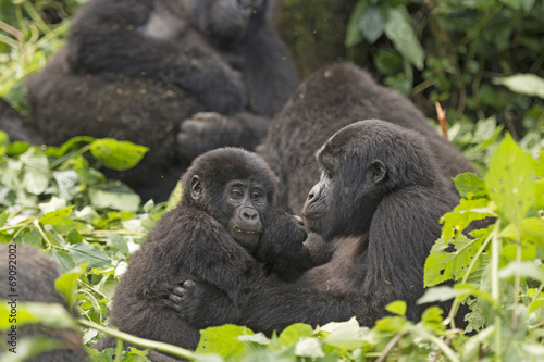 Foto op Canvas Aap Mother and Child Gorilla in the Forest
