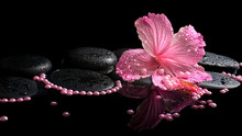 "Постер, картина, фотообои ""Beautiful spa still life of pink hibiscus, drops and pearl beads"""