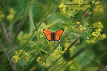 papillon - Aout 2014