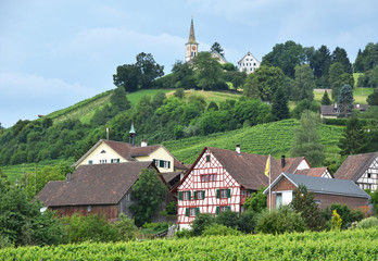 Vineyards in Rhine region, Switzerland