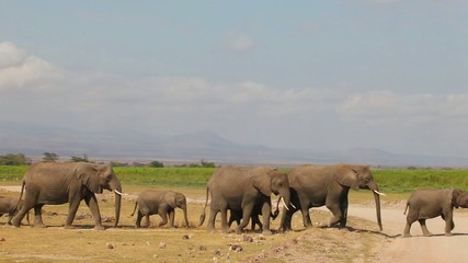 Close-up of a large herd of elephants comes to watering.
